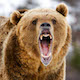Restoring-Grizzlies---FarmsNext